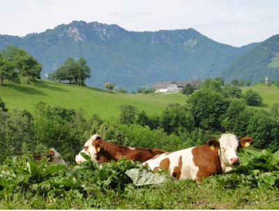 Almwandertag Oberösterreich 2014