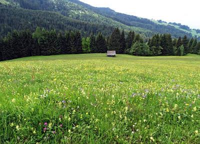 Bewirtschaftung von Magerwiesen