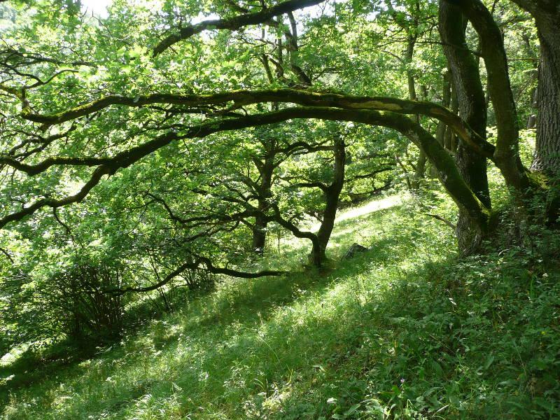 Naturwaldzellen Eichenwaldrand